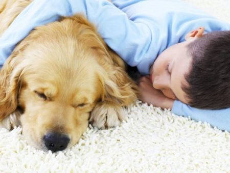 How to clean pet urine from carpets naturally?